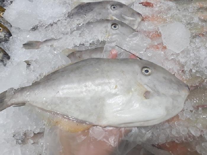 Cá bò khô được làm từ những con cá bò to, béo tròn